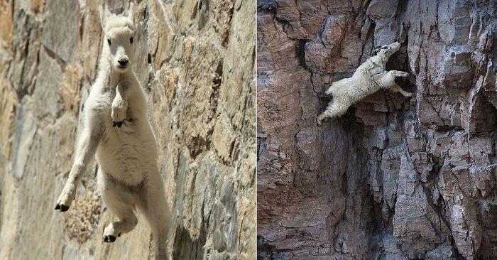 20 фото, доказывающих, что горные козлы круче гор! - http://wuzzup.ru/20-foto-dokazyivayushhih-chto-gornyie-kozlyi-kruche-gor.html