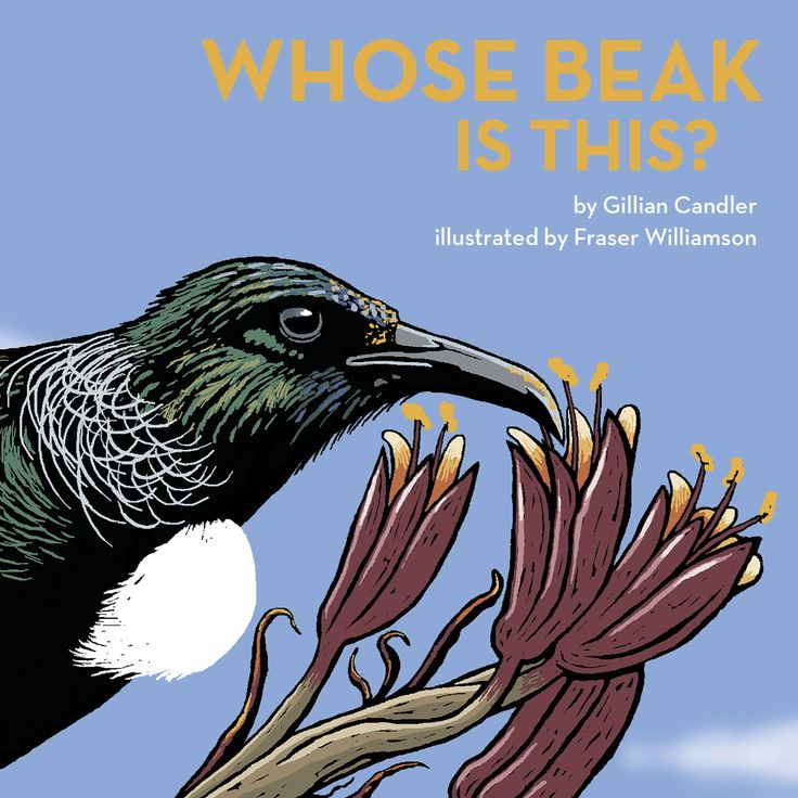 """""""Whose beak is this?"""", by Gillian Candler ; illustrated by Fraser Williamson - Guess the identity of iconic New Zealand birds from the pictures of their beaks, while finding out some facts about the birds along the way. This approach introduces an important science concept about adaptation : birds' beaks are a very obvious adaptation to the kind of food they eat."""