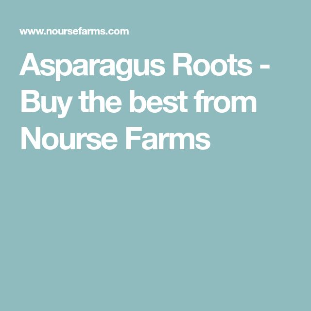 Asparagus Roots - Buy the best from Nourse Farms