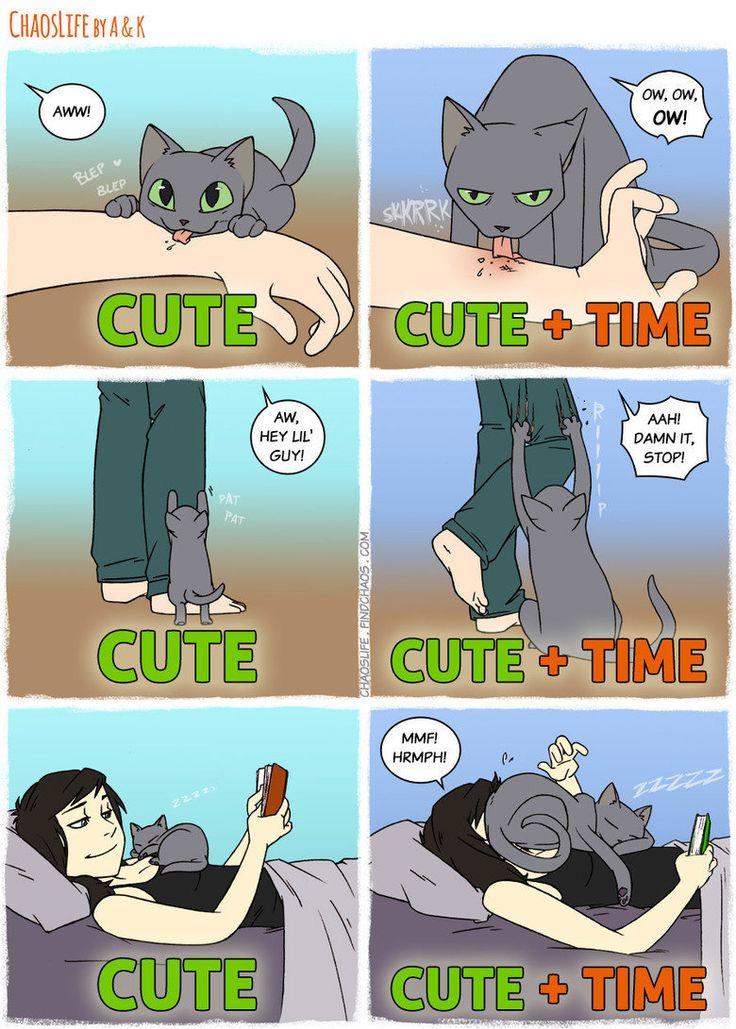 Igual a lo que me pasa jajajja #lol #humor #funnycatpics