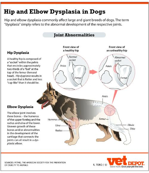 Information about Elbow & Hip Dysplaysia in Dogs