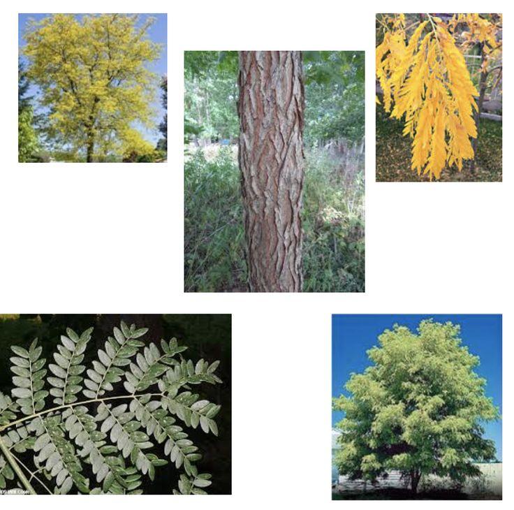 15 best Spring flower Tree Identification images on Pinterest ...