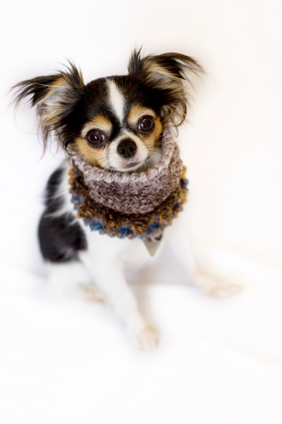 The Jester Cowl  Dog Scarf  Chihuahua  XS  2 to 4 by PaperRaisins, $15.00