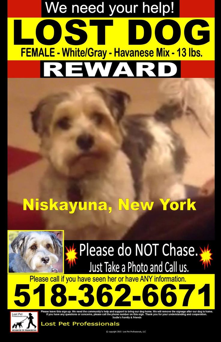 Jamie Katz Dog Missing / Pet Lost U0026 Found Alert Group 5 Mins · NISKAYUNA  Lost Pet Template