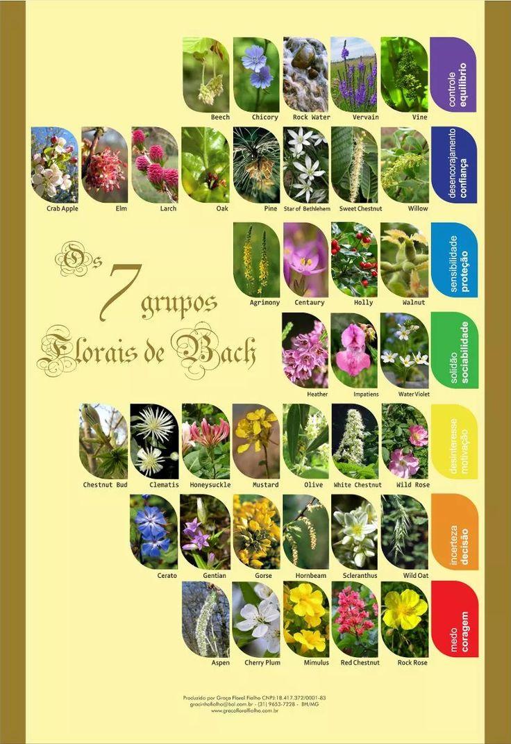 poster florais de bach 7 grupos - frete grátis laminado a-3