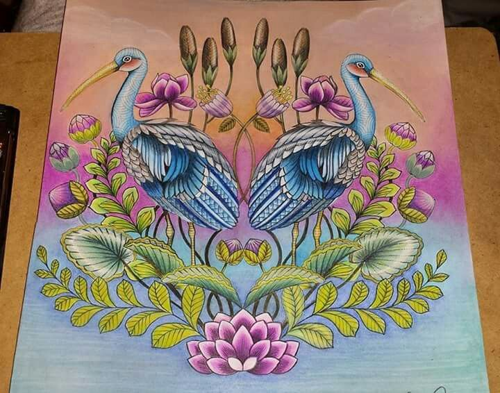 900 Best Images About Millie Marotta Colourings On Pinterest