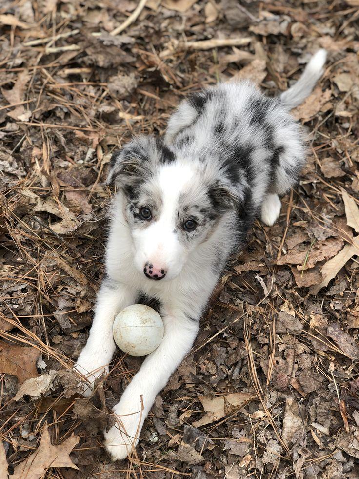 Pin by Laushey on Fluff Balls Dogs, Husky, Animals