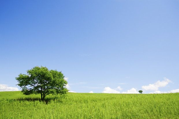 Two Trees in an Open Field - Wall Mural & Photo Wallpaper - Photowall