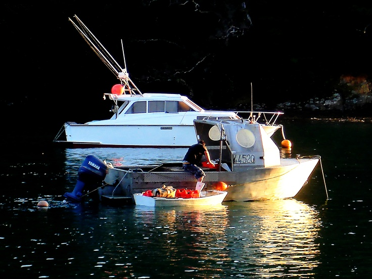 Fisherman entering his office for a days work. Leigh Harbour NZ 2012