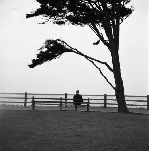 VIVIAN MAIER  Man Sitting Beneath Tree  simple as is...