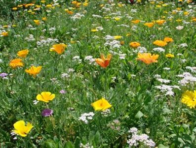website on how to create a meadow http://www.bbc.co.uk/gardening/basics/techniques/organic_meadow1.shtml