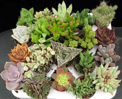 Hey, I found this really awesome Etsy listing at http://www.etsy.com/listing/162587049/cactus-mix-seeds-gardening