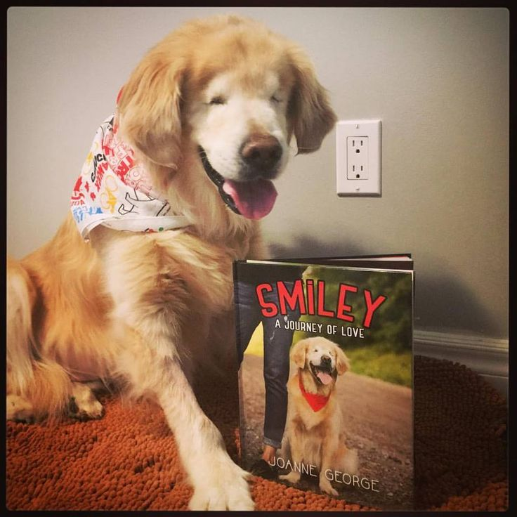 Best Goldens Images On Pinterest Golden Retrievers Friends - Born blind smiley the golden retriever becomes a loving therapy dog