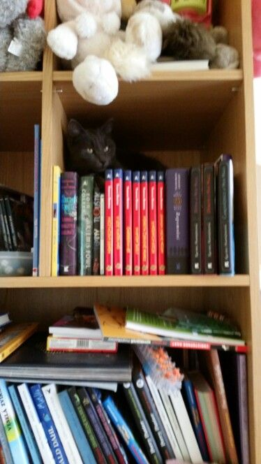 Gušík in a library; can you find him?