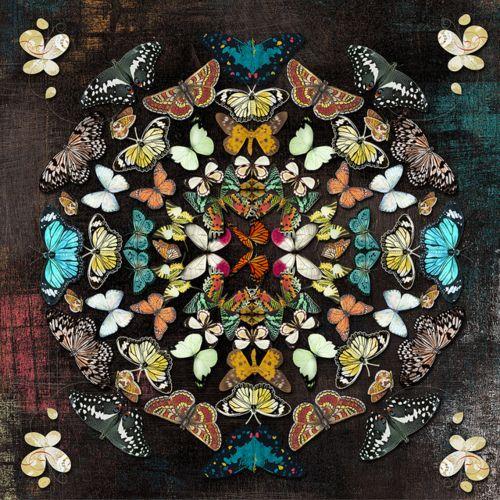 Butterfly. Butterflies. Mandala.