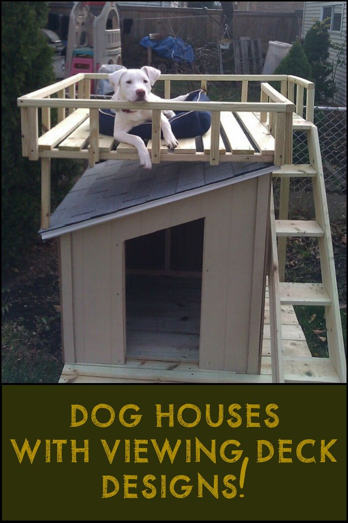 What does your pet think of this idea?