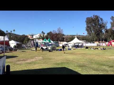 Crazy Video Shows Dust Devil Wreaking Havoc At Rose Bowl, Injuring 3: A sudden 'dust devil' hit the fanfest area outside the Rose Bowl in Pasadena today, sweeping up pop-up tents and injuring three people.  While the video posted to YouTube initially identified the incident as a tornado, Ryan Kittell of the National Weather Service said it looks more like a 'dust devil,' KTLA reports. He said that a lingering cold front had resulted in strong winds throughout SoCal.