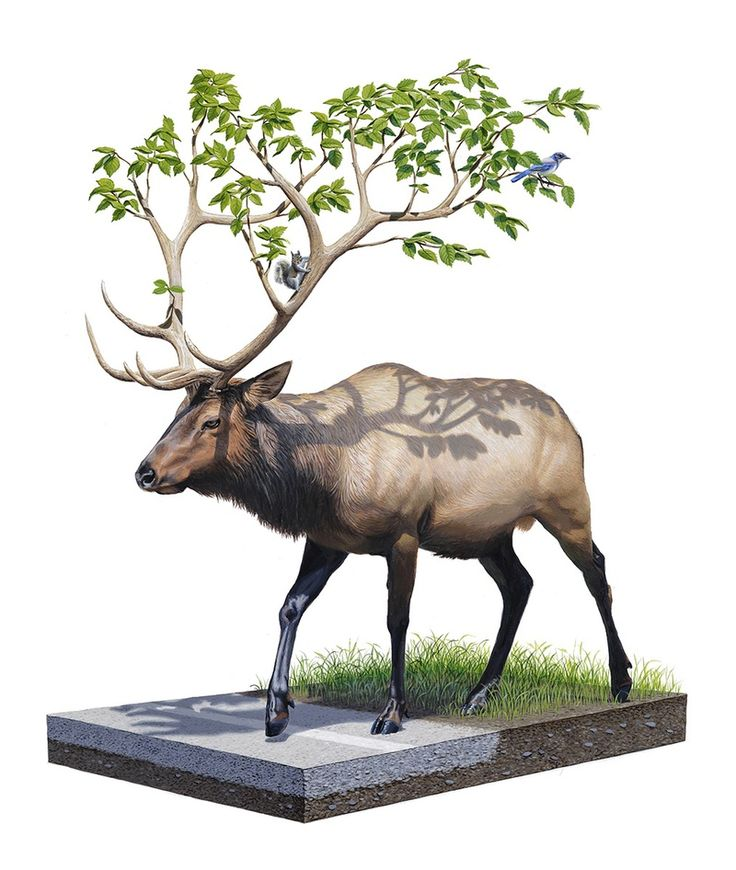 Josh Keyes Roaming Woods