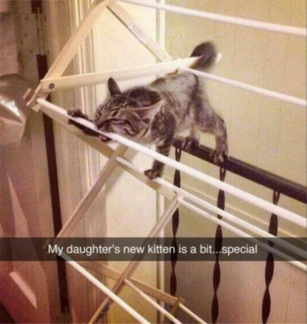 Funny, Memes, Pictures: animal-pictures-1