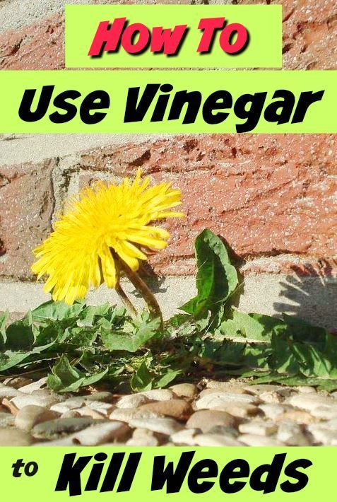 1000 images about best of get green be well on pinterest hemp seeds popcorn recipes and - Get rid weeds using vinegar ...