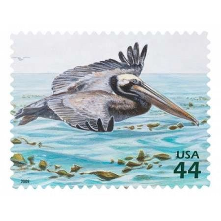 Brown Pelican Canvas Art - US Postal Service (22 x 28)