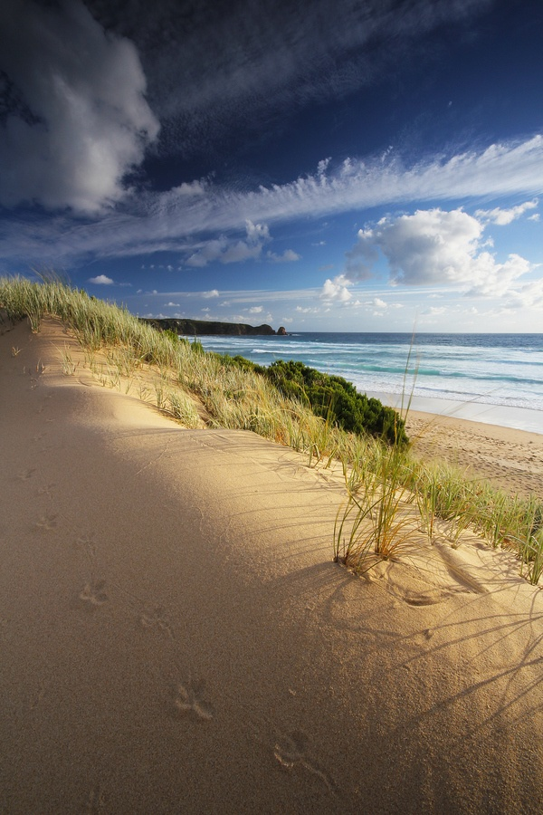 Phillip Island, Australia #carrymehome #amreading #historicalromance www.dorothyadamek.com:
