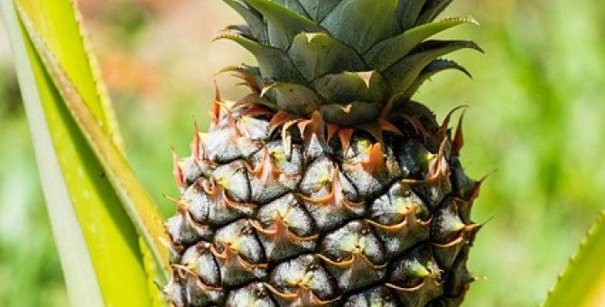 Pineapple and Ham Salad