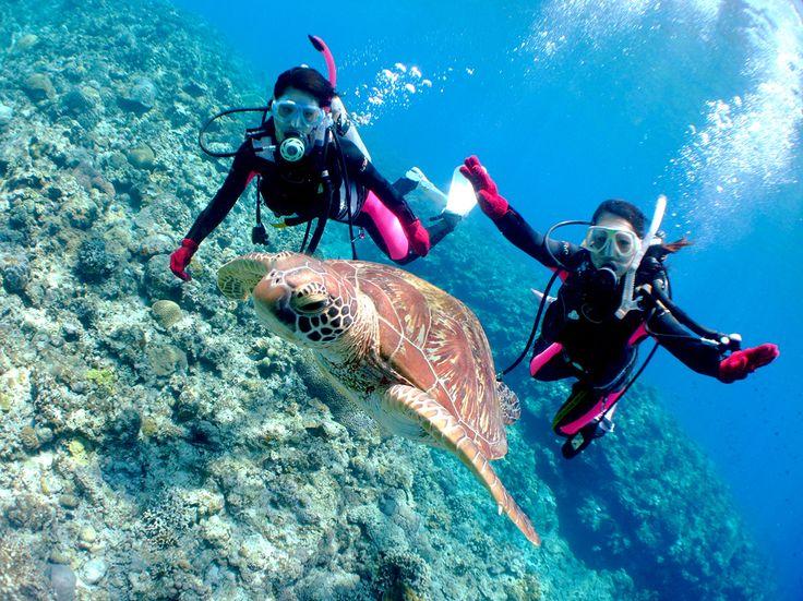 Japan's Diving Spots TOP 5 – 1 http://www.jnize.com/en/article/100000129/