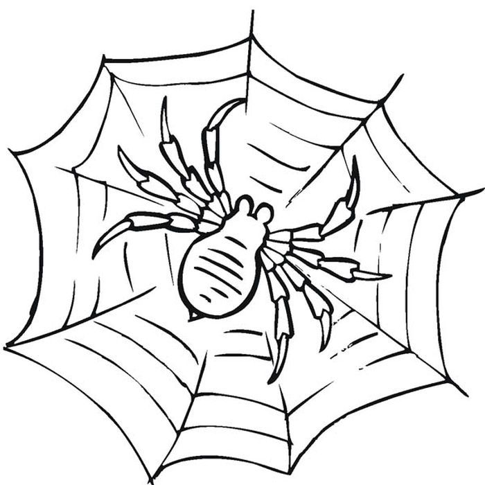 Animal Coloring Kit Unique Coloring Pages Spider Web Coloring Page