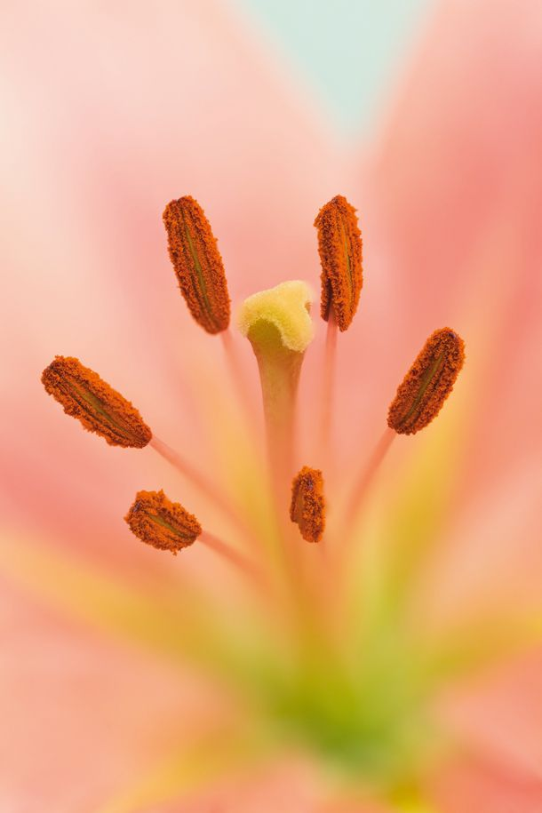Spring pictures: how to set up your camera for seasonal close-ups