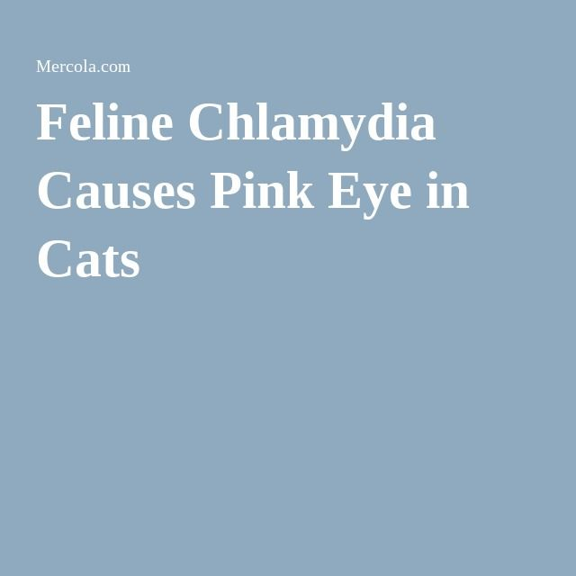 Home Remedy Pink Eye Cats