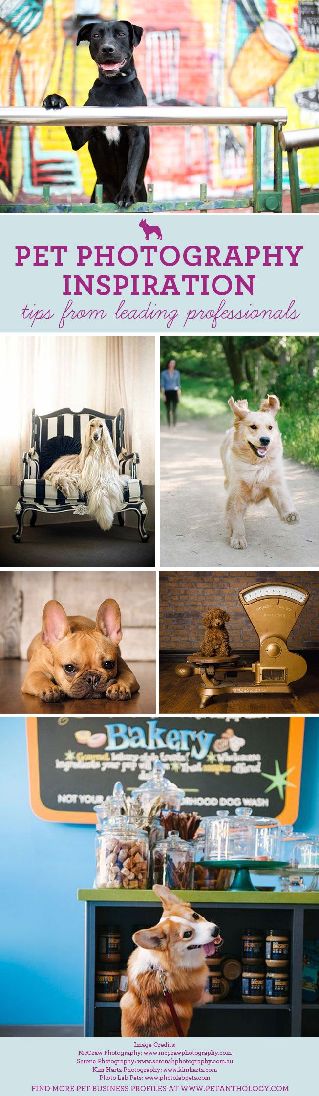 The Pet Anthology | Pet Business Profiles - Inspiration from leading Pet Photographers at www.petanthology.com  #pet #photography #tips