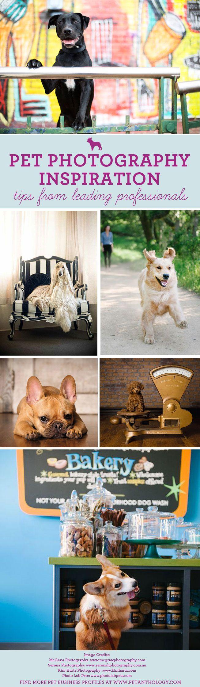 The Pet Anthology | Pet Business Profiles - Inspiration from leading Pet Photographers at www.petanthology.com  #pet #photography #tips