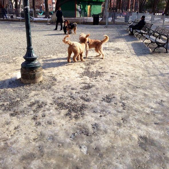 Colonial Park Nj Dog Park