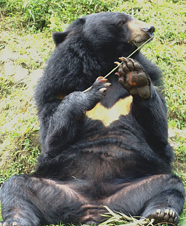 155 best images about Bears on Pinterest | Baby polar ...