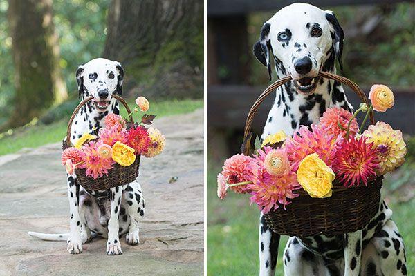 Flower Magazine Man's Best Friend Beside The Best Man At The Wedding