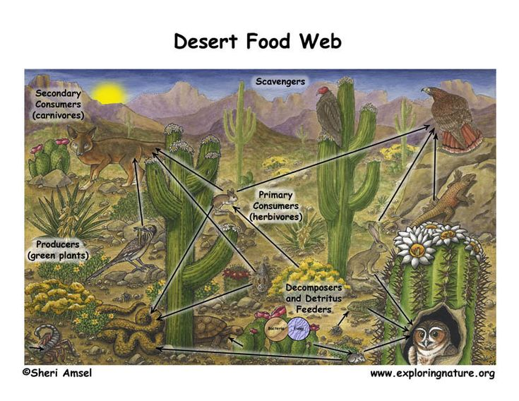 biome desert and food chain essay Download thesis statement on biome desert and food chain in our database or order an original thesis paper that will be written by one of our staff writers and.