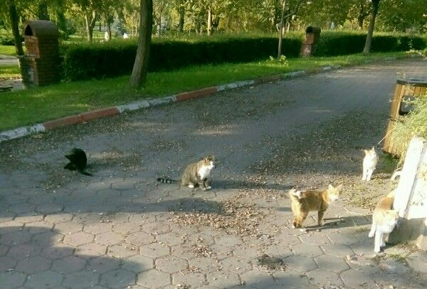 Meeting of cats