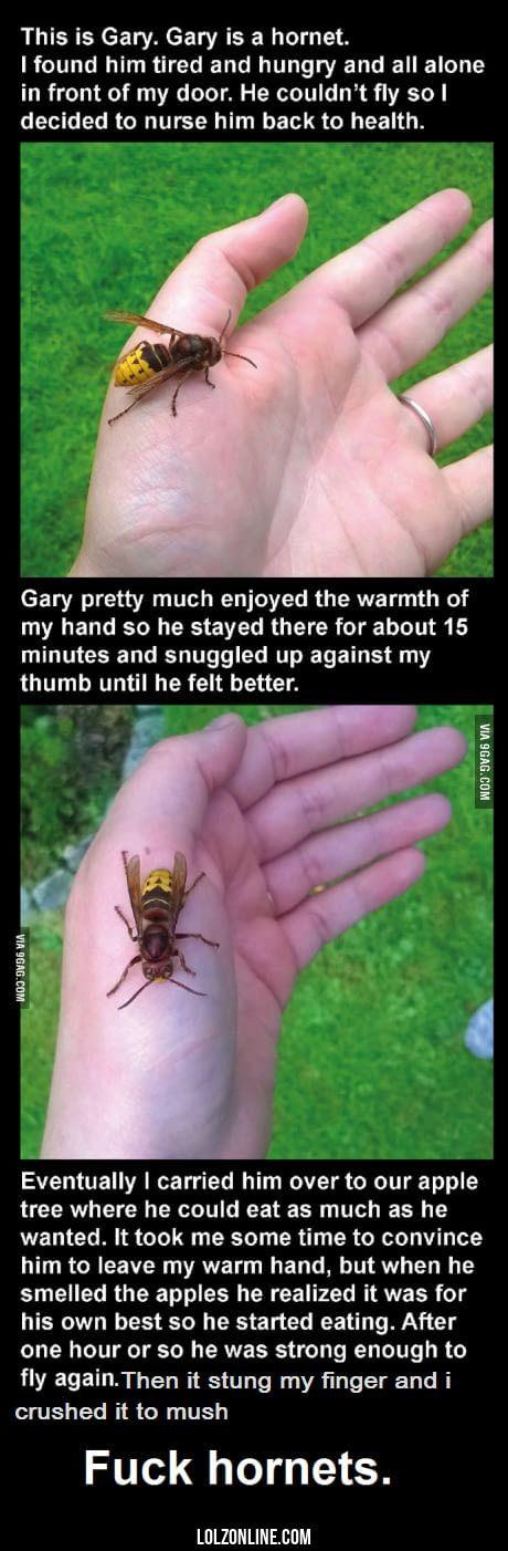 Gary the hornet#funny #lol #lolzonline