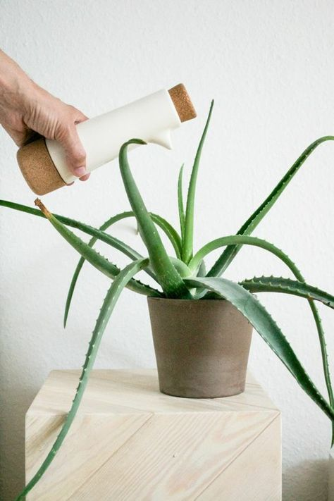 17 Best Ideas About Zimmerpflanzen Pflege On Pinterest   Orchideen ... Orchideen Pflege Tipps Fur Die Wunderschonen Zimmerpflanzen