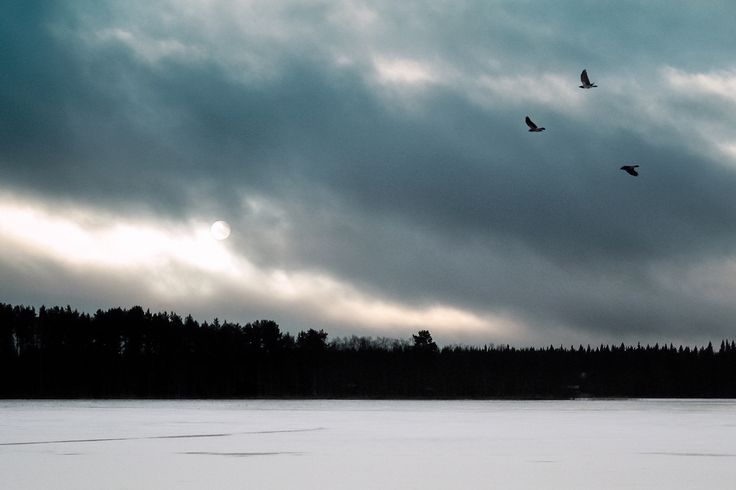 Crows over a lake - This photo is published under Creative Commons Attribution-NonCommercial 3.0 license.