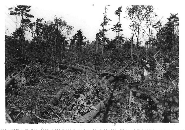Hurricane damage from the great New England Hurricane of 1938, near the Brooks home? Perhaps on Blue Hill, or in New Hampshire. © Archives of the American Meteorological Society.  Blue Hill Observatory Photograph Collection.  By amsarchives, via Flickr.