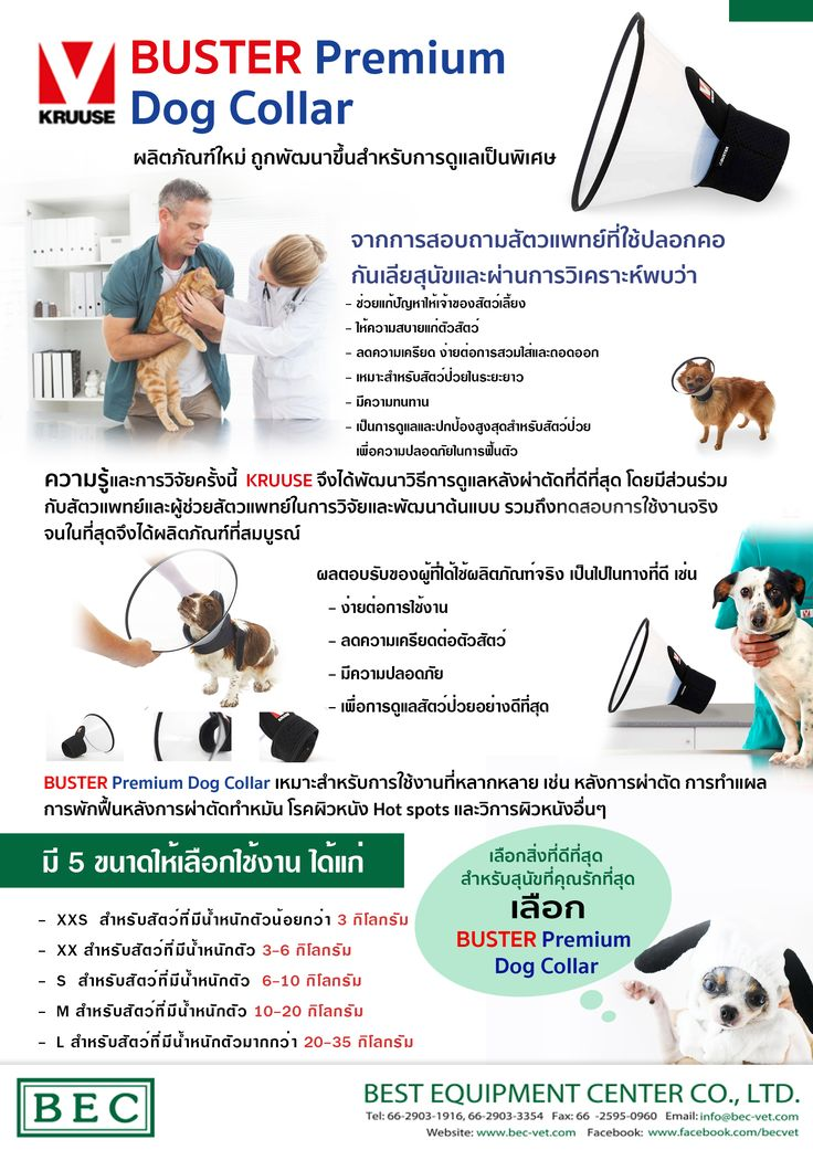 Pantip Com J12685722 รบกวนแนะนำร านทำตาข ายท ระเบ ยงคร บ อยากเอาแมว กล บมาเล ยง แมว แมว