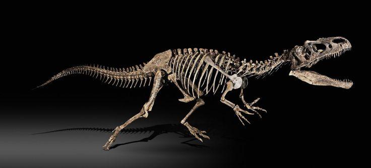 Allosaurus - Rare squelette complet, long de 10,12 mètres, d'allosaure, dinosaure carnivore provenant du Wyoming, Etats-Unis. © Sotheby's/ArtDigital Studio