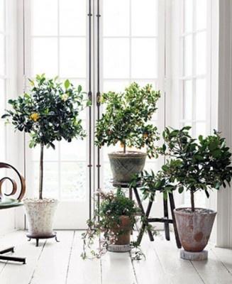 small indoors garden