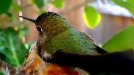 Coolest thing ever!  Click here to watch a live feed of a hummingbird nest.