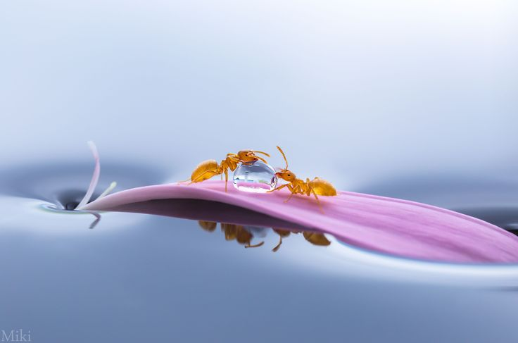 Photograph Share by Miki Asai on 500px