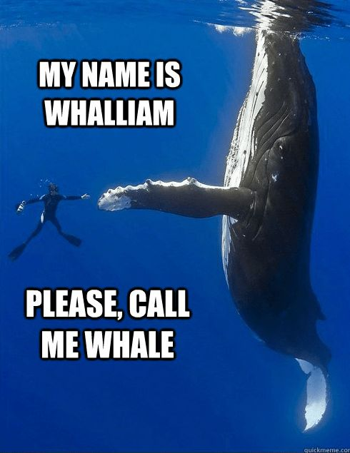 16 Whale Memes That Will Make You Laugh All Day
