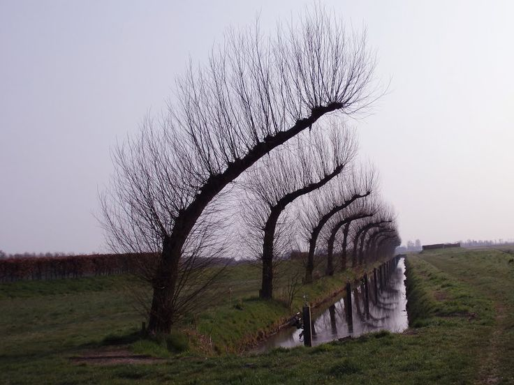 Stadsmarkering Groningen - S07 Groningen (William Forsythe) - oude methode van Groningse scheepsbouwers om hout de kromming te geven voor de spanten