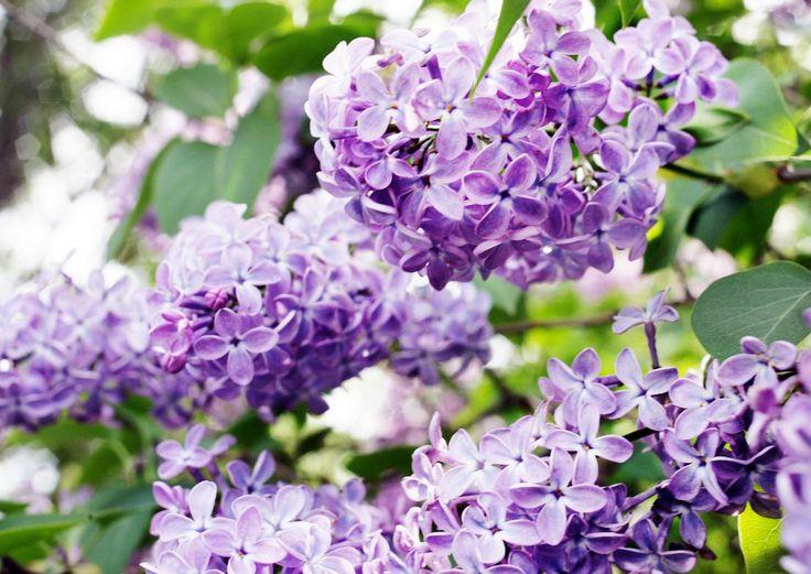 Hyvin valitut kasvit menestyvät ja luovat kauneutta ympärilleen. Lue Meidän Talon vinkit ja valitse omalle pihallesi sopivat helpot monivuotiset kasvit!